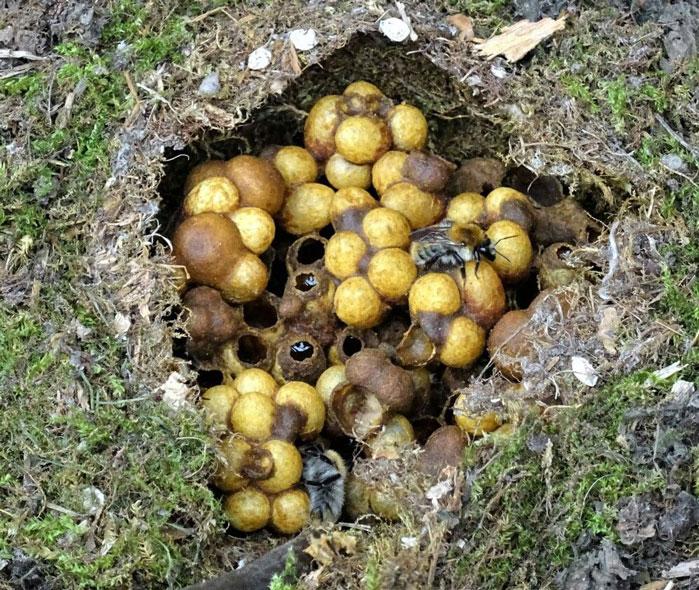 nid de bourdon